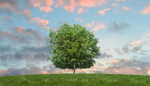 Respetuosos con el medio ambiente