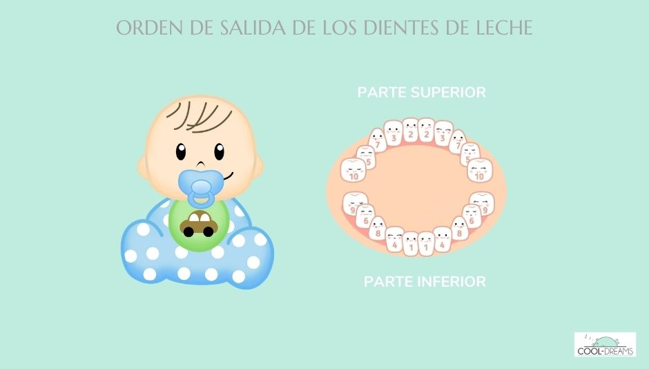 Orden de salida de los dientes en los bebés